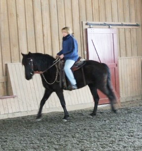 2012 Registered Rocky Mountain mare for sale